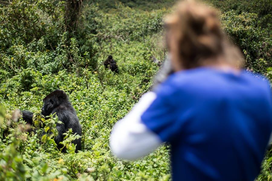 Gorilla Tracking PNV