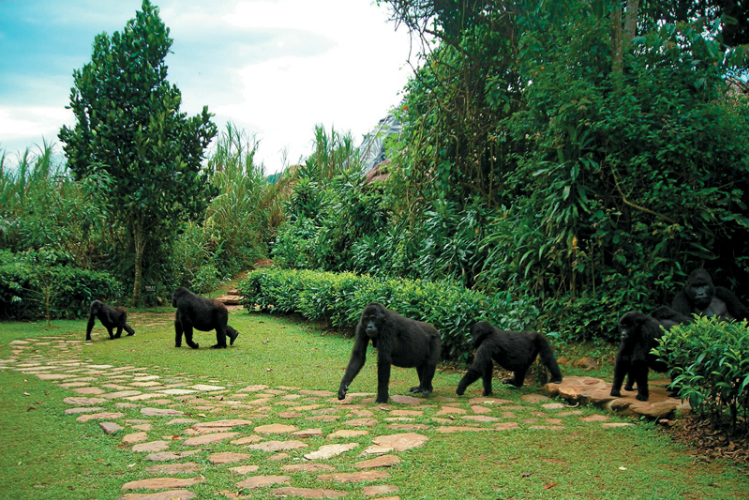 Bwindi Lodge Gorilla Family
