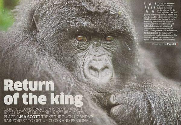 Volcanoes Safaris Return Of The King