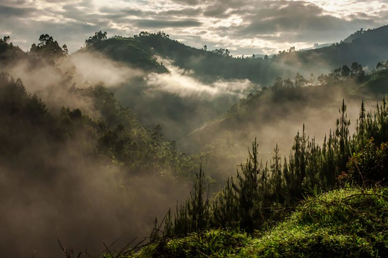 Blind-Impenetrable-Forest-National-Park